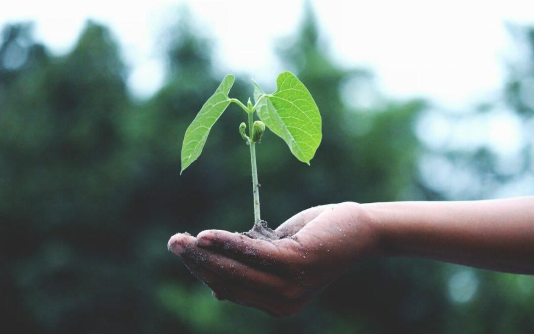 Avaliação de impacto do financiamento do Agronegócio sobre a sustentabilidade
