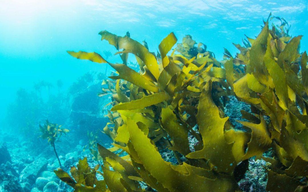 Especialistas afirmam que oceanos são o verdadeiro pulmão do mundo