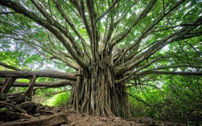 Ogham – o oráculo celta que celebra o Dia da Árvore