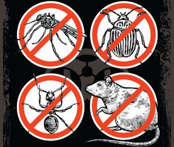 Aprag alerta para a necessidade de reforçar o combate de insetos e roedores nas cidades