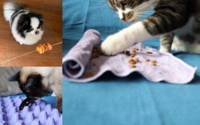 5 dicas de brinquedos reciclados para os pets