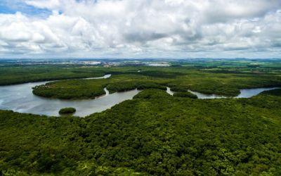Proteção das Florestas é essencial para a nossa sobrevivência