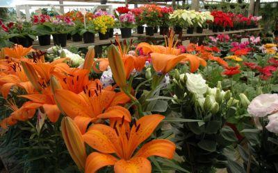 Flores e plantas: setor entra na rota da sustentabilidade