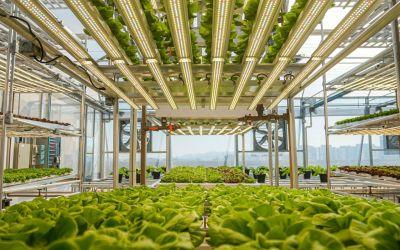 Hortas urbanas levam alimentos a diferentes comunidades